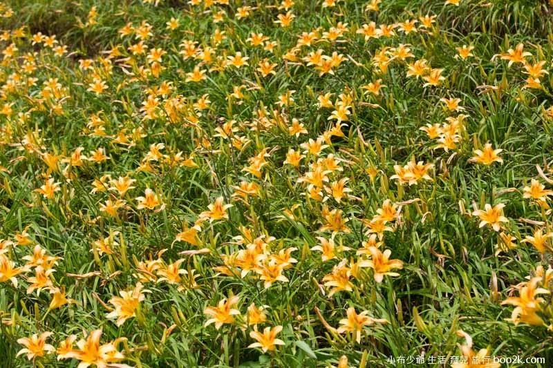 芝柏山莊 牧蜂農莊-52