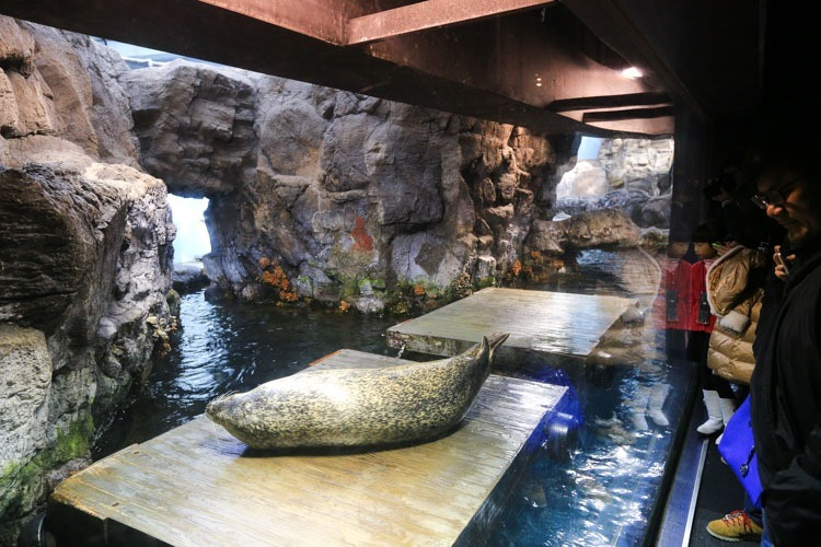大阪 海遊館-24