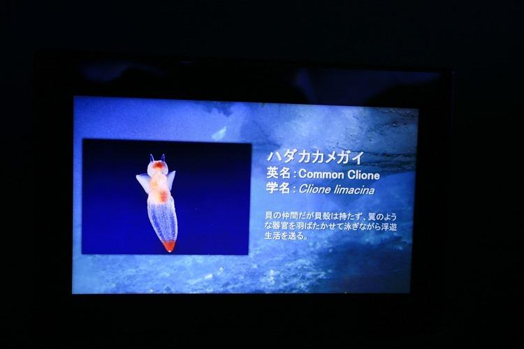 大阪 海遊館-60