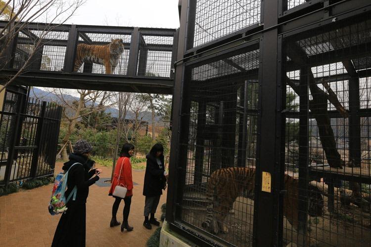 京都 動物園 (13 - 78)