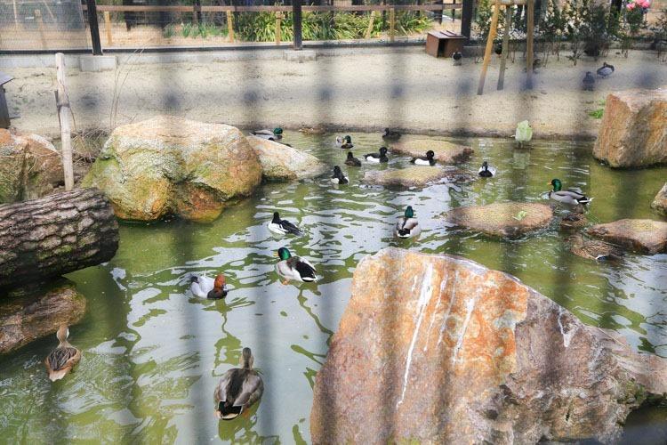 京都 動物園 (23 - 78)