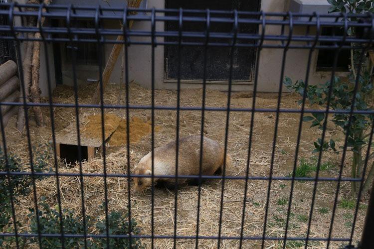 京都 動物園 (28 - 78)