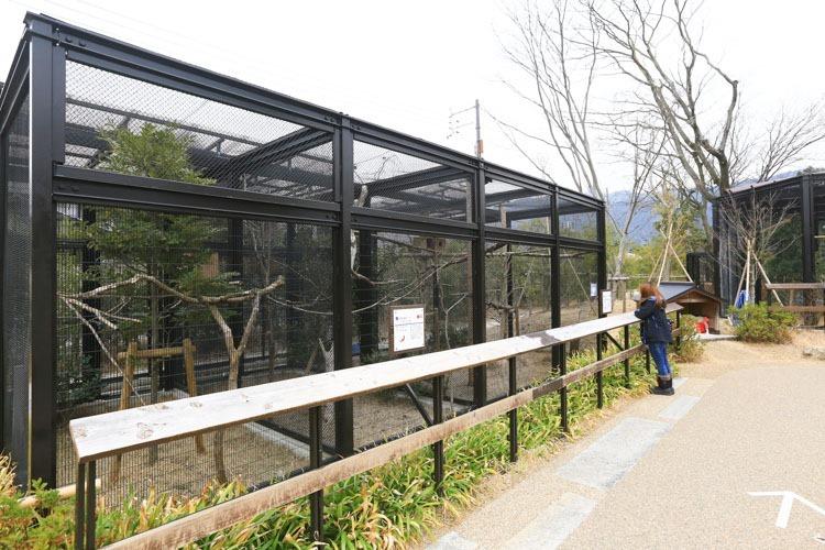 京都 動物園 (29 - 78)