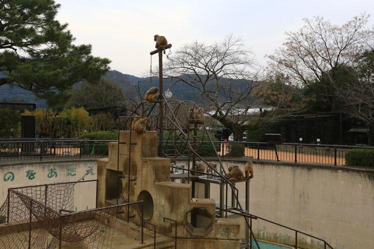 京都 動物園 (35 - 78)