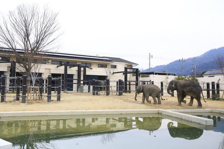 京都 動物園 (43 - 78)
