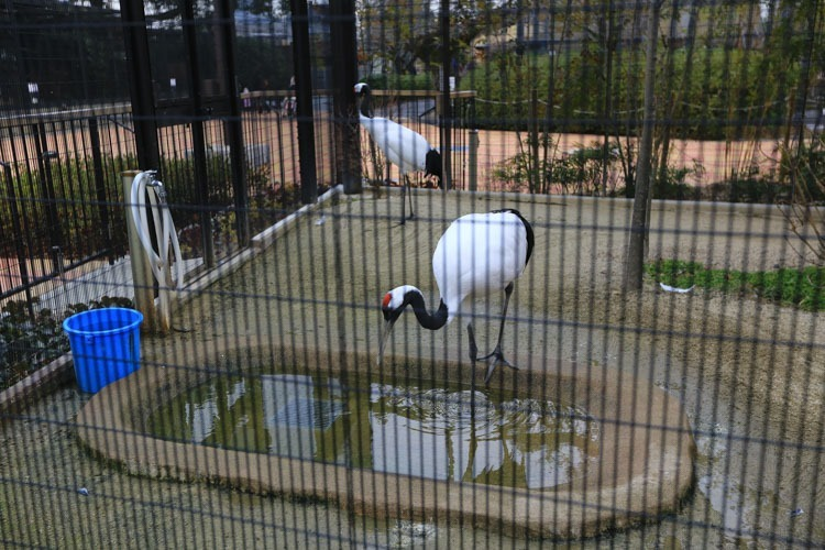 京都 動物園 (47 - 78)