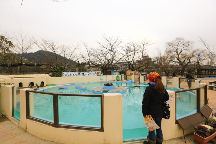 京都 動物園 (51 - 78)
