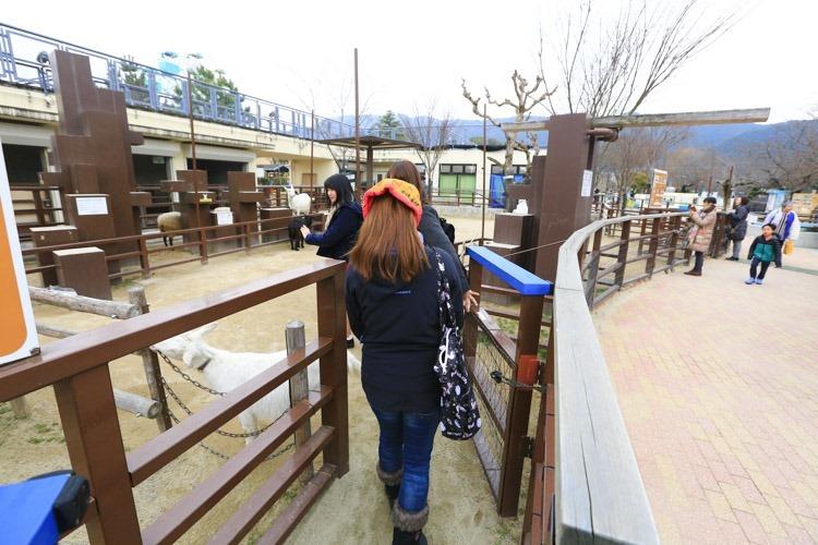 京都 動物園 (58 - 78)