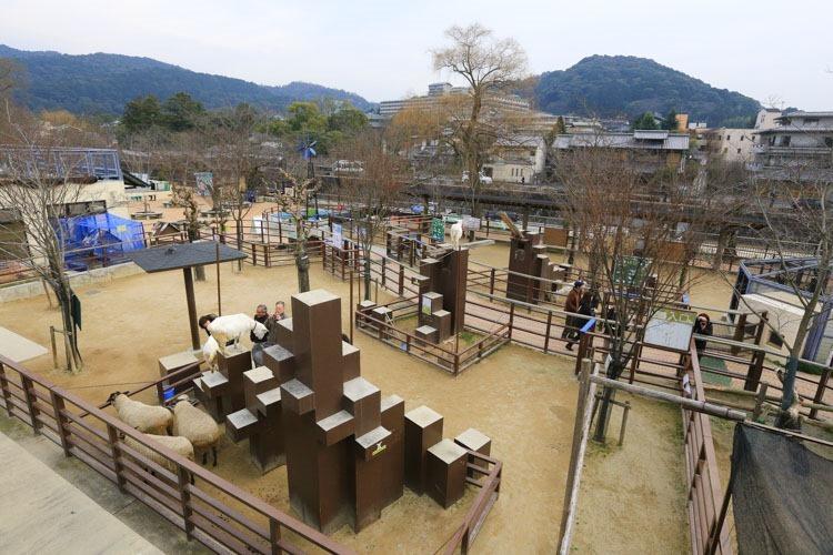 京都 動物園 (69 - 78)