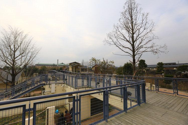 京都 動物園 (70 - 78)