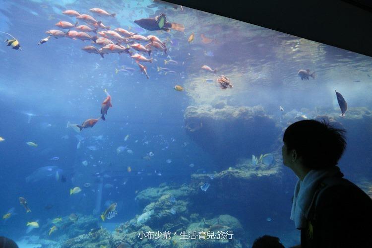 沖繩 北部 美麗海 親子遊-107