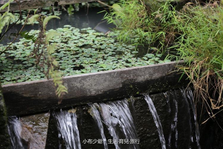 宜蘭 勝洋水草-97