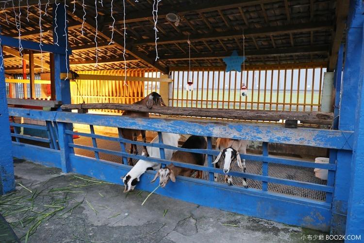[宜蘭親子餐廳]水鹿咖啡廳餵羊去 藏在咖啡廳裡的小觀光牧場IMG_6981