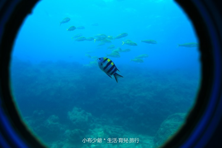 日本 沖繩水中展望塔 玻璃船1-17